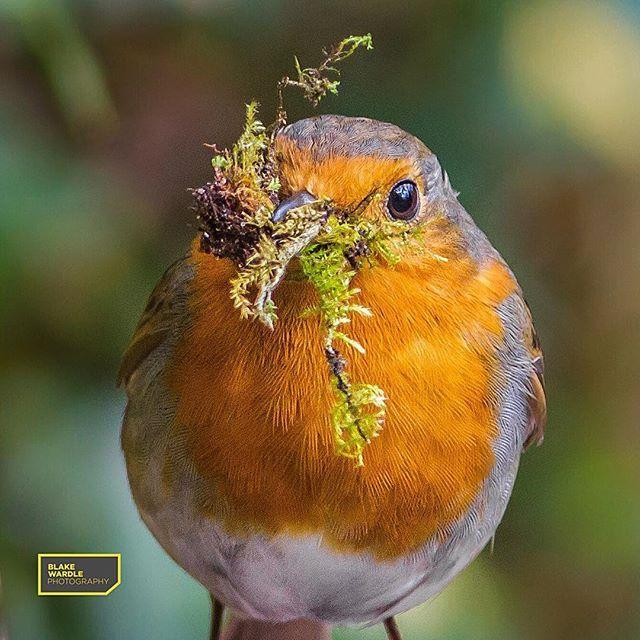pin auf animals — birds
