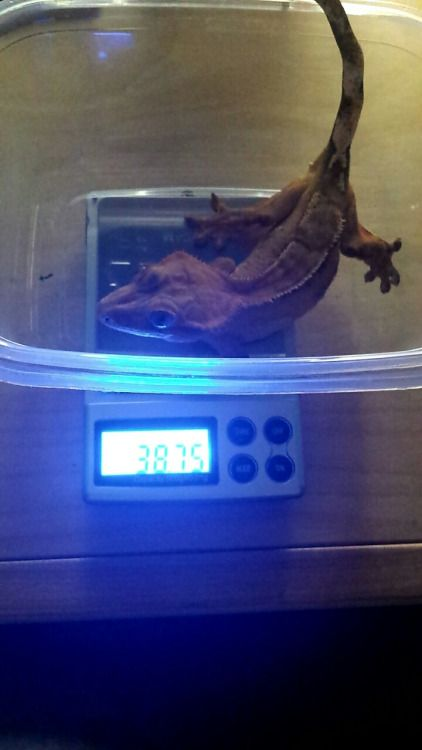 one-geck-to-rule-us-all:  I doubt she gained 2g in 10 days. Who...