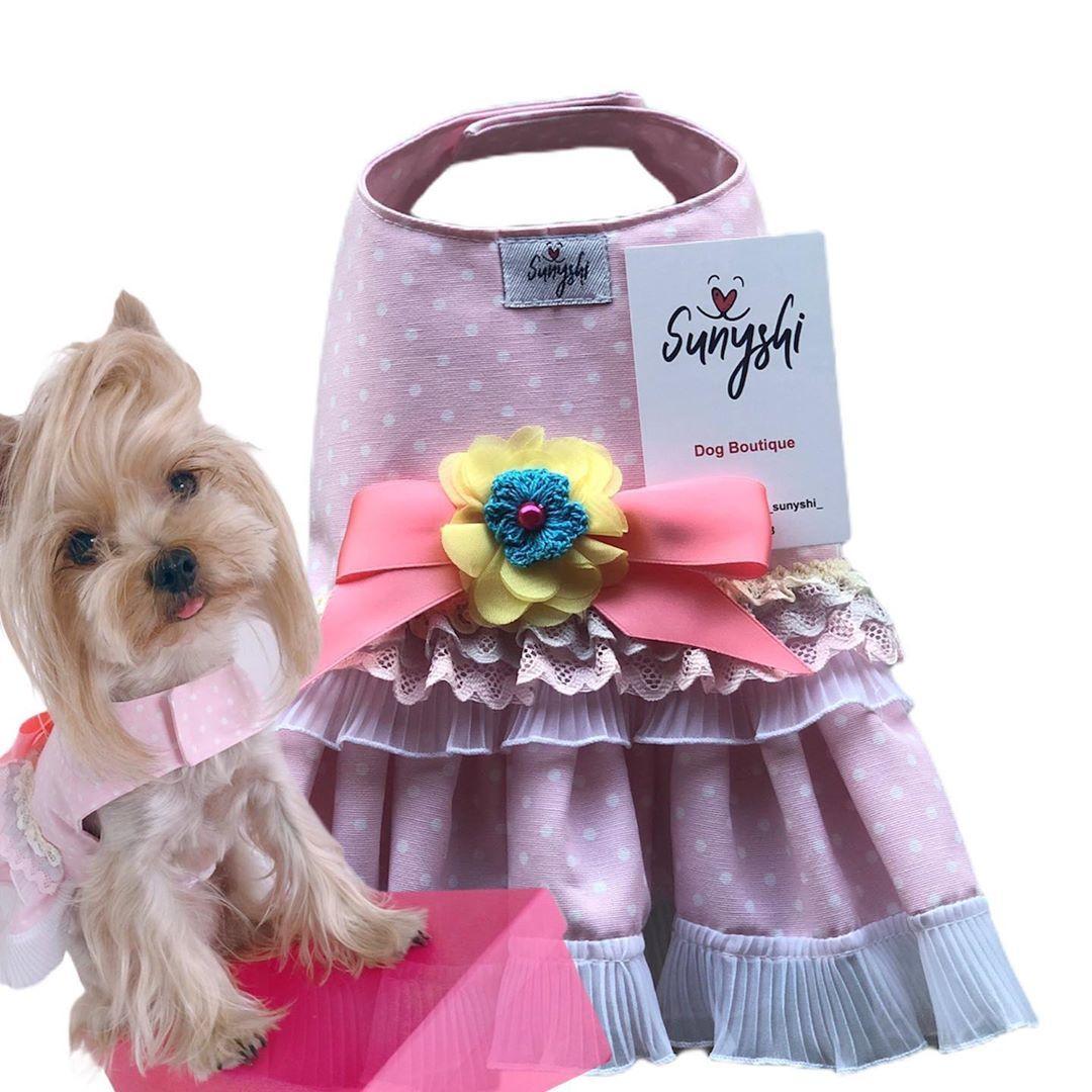 """Sunyshi on Instagram: """"Vestido Sweet Sunyshi 55€ ENVÍO GRATIS A ESPAÑA . . . #sunyshi #InstaDogs #InstaPuppy #DogsModel #Photo #Instavideo #adorable #instacute…"""""""
