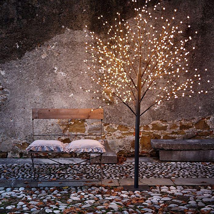 Photo of Fiorirà un giardino: Magie di Luce