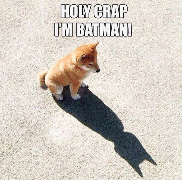 Holy Crap I'm Batman! #shiba