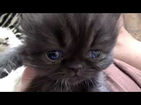 This is just the most adorable little kitten...its about a