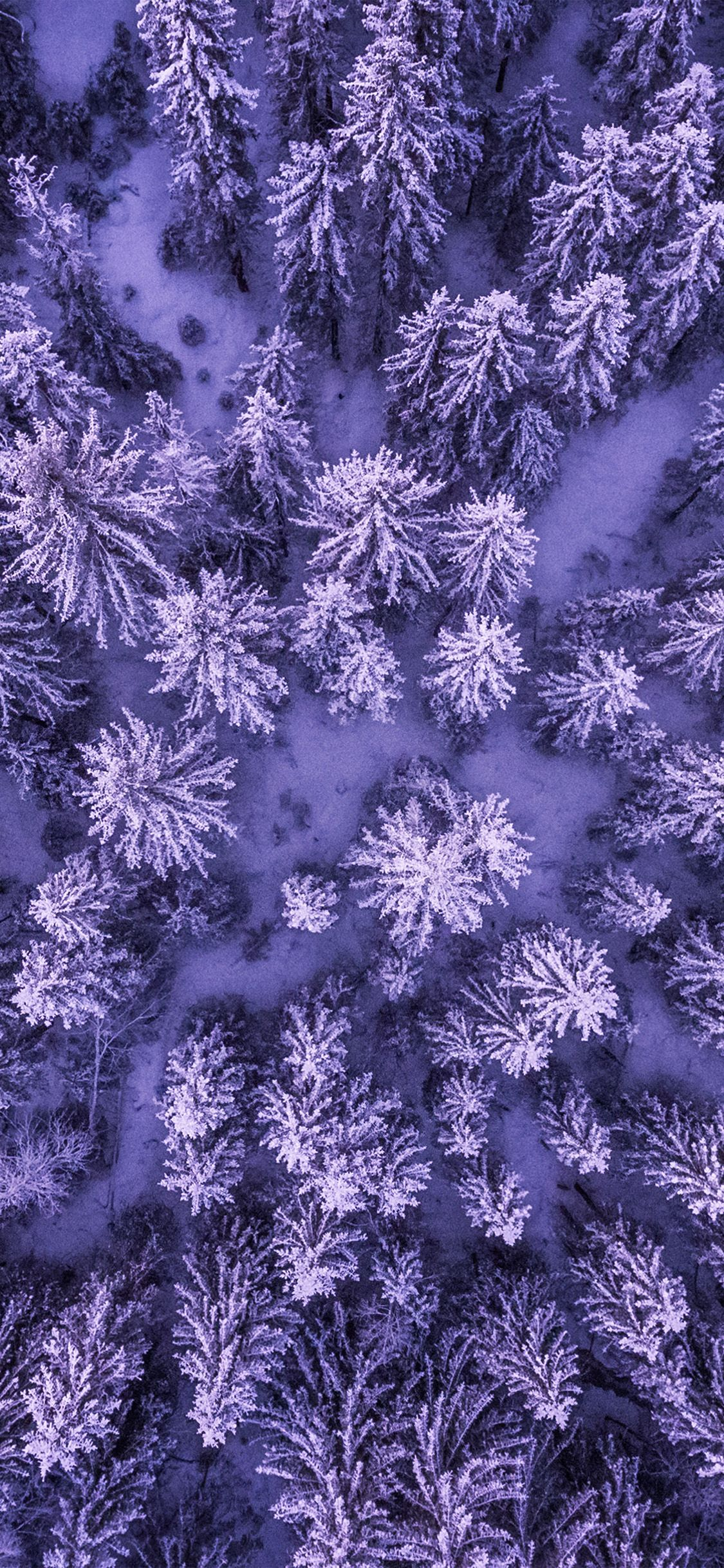 nx50 mountain forest wood purple nature via