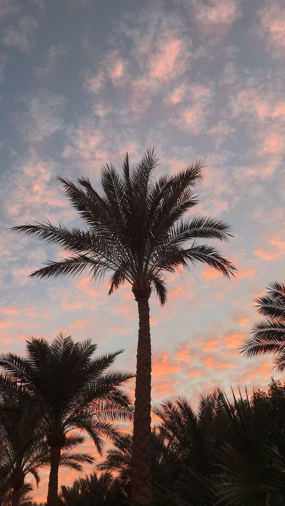 Photo of iphone wallpaper videos #hintergrundbildiphone #tapete Palm tree, slow moments #…
