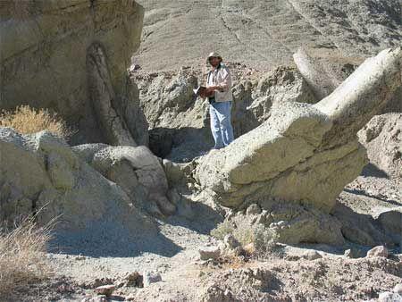real giant human skeleton found   giant skeletons   pinterest, Skeleton