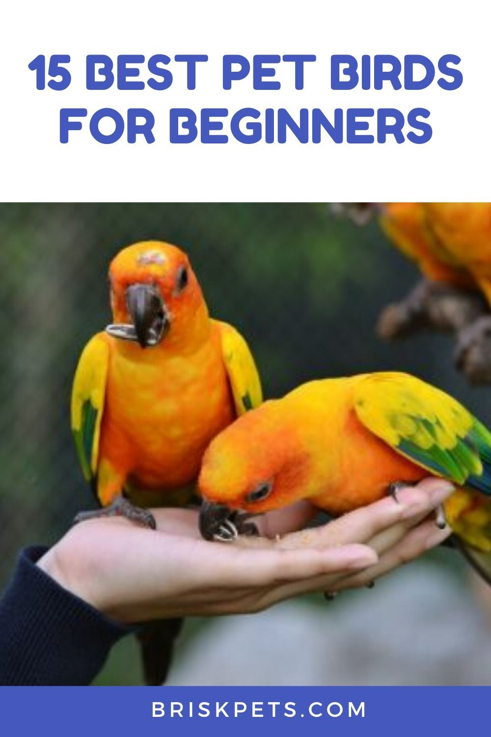 15 Best Pet Birds for Beginners in 2020 Best pet birds