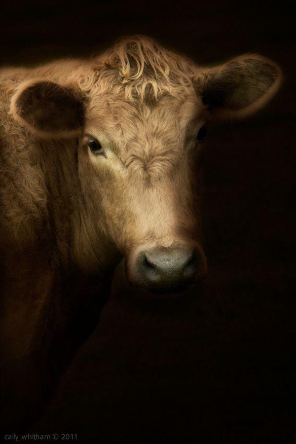 Animal Photography Design Pinterest Beautiful