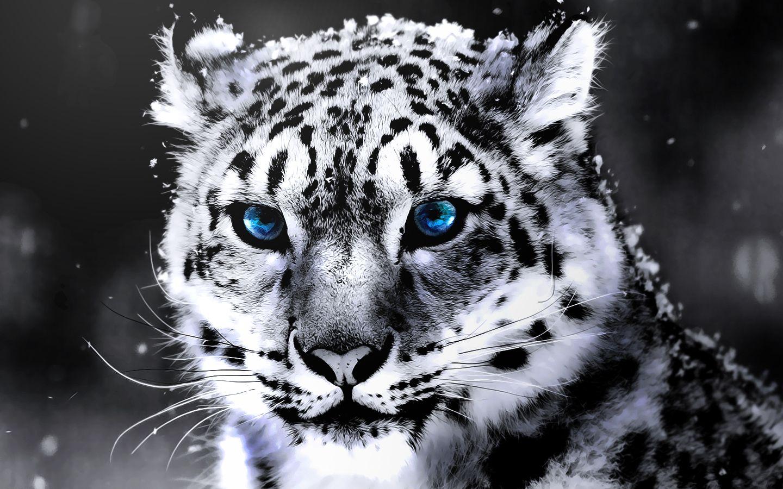 SnowLeopard- TrainingRetouch 1 by wizardino.deviantart.com on @deviantART
