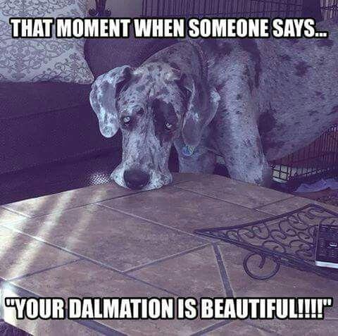 Photo Courtesy Of Facebook Great Dane Rescue Inc Great Dane