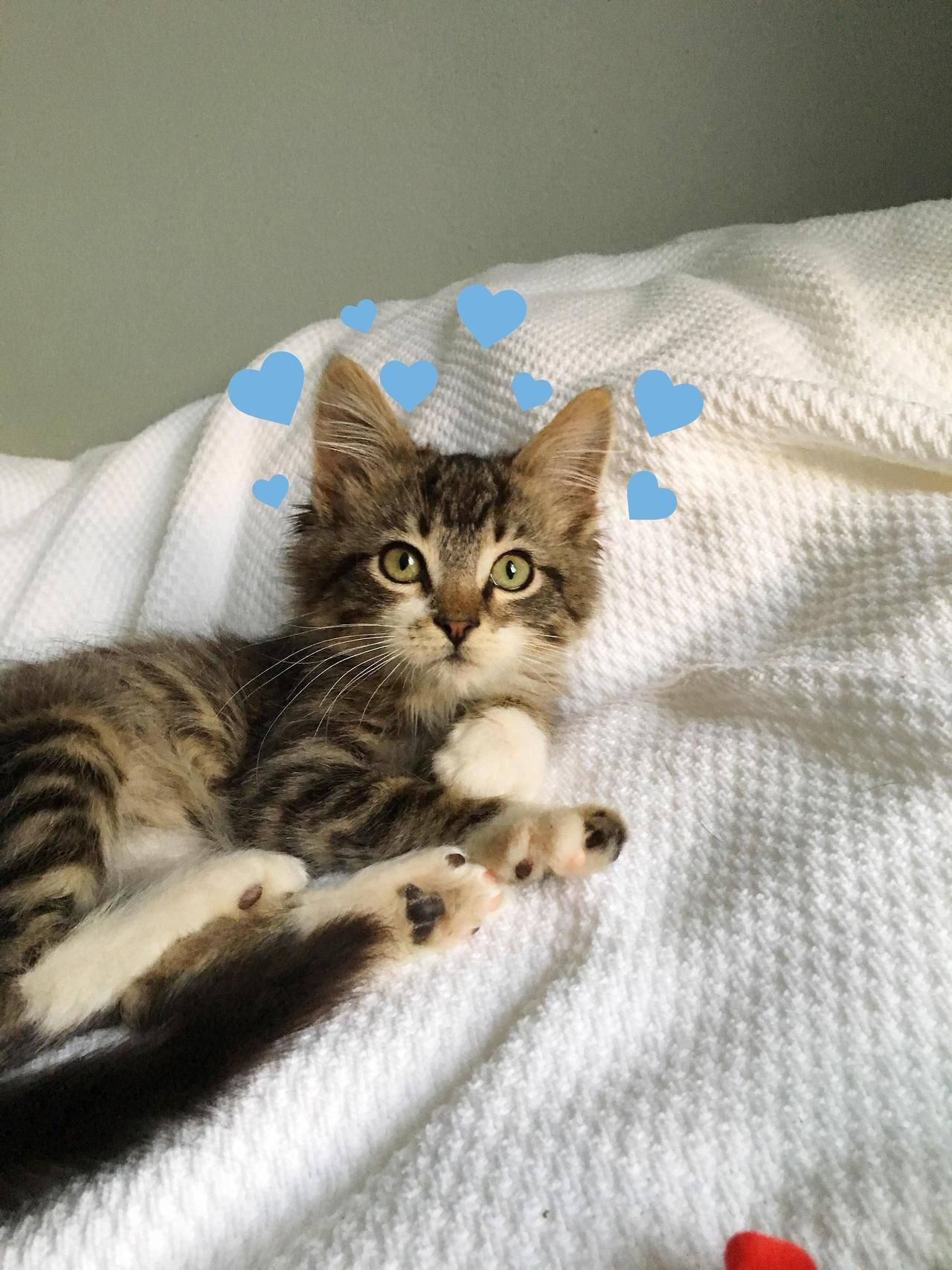We Ended New Years Day With Adopting Our New Son 3 Month Old Theo By Zaofools Cats Kitten Catsonweb Cute Adorable Funny Sleep Cute Baby Animals Cats Cute Cats