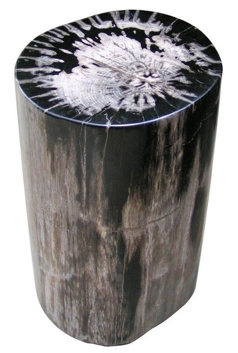Petrified Wood   Stunning For Side Tables Home Design Ideas