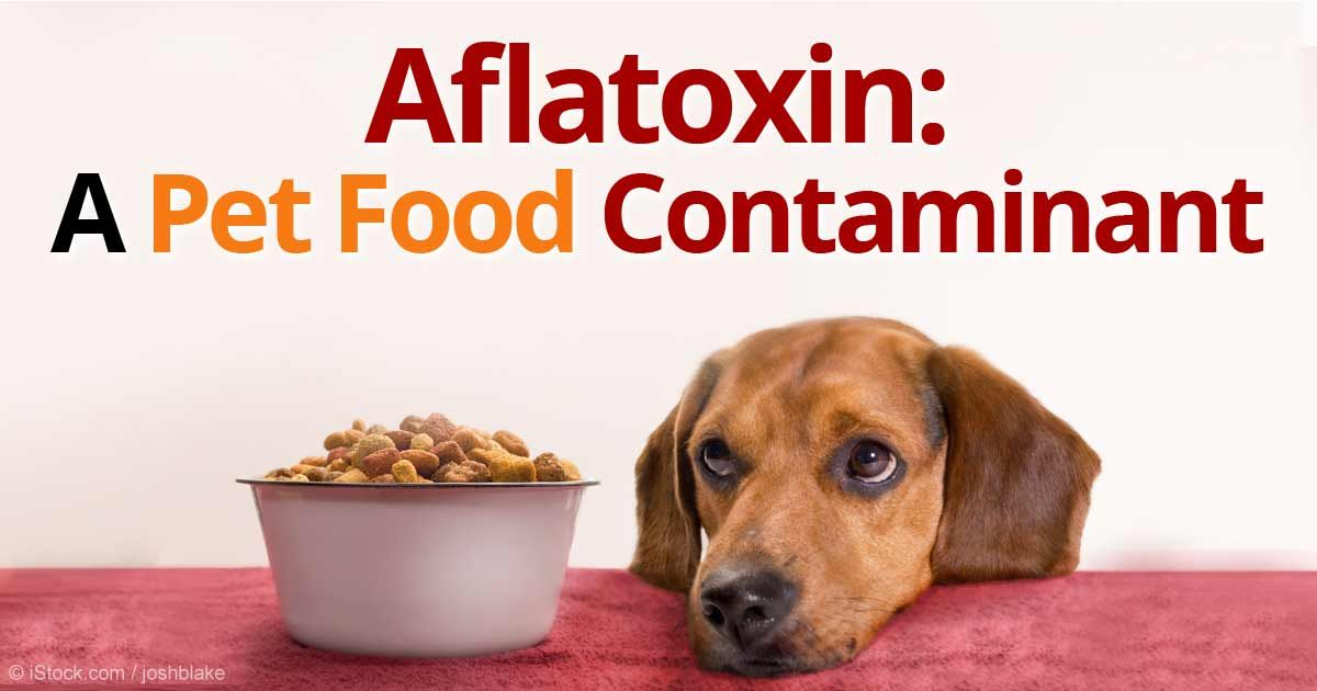 Starch Related Pet Food Ingredients Kill Pets Food Animals Dog