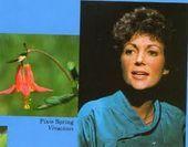 pixie spring color palette  Google Search #colorpalettecopies