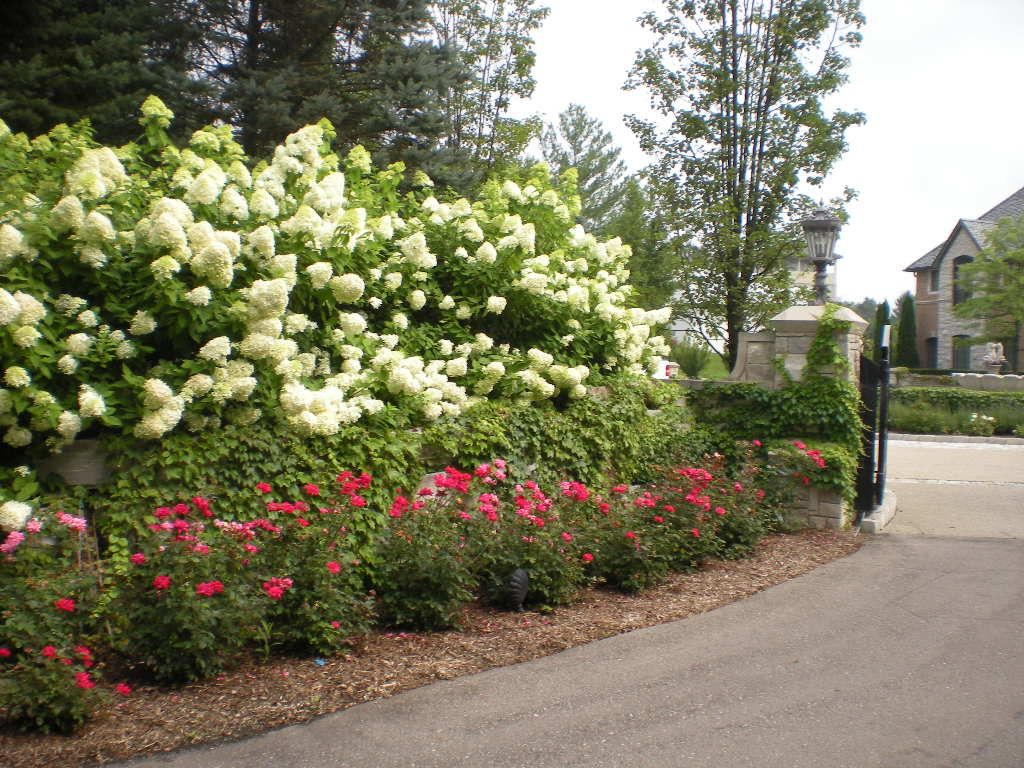 Planting Ideas For Knockout Roses Knockout Roses Rose Garden Design Hydrangea Landscaping