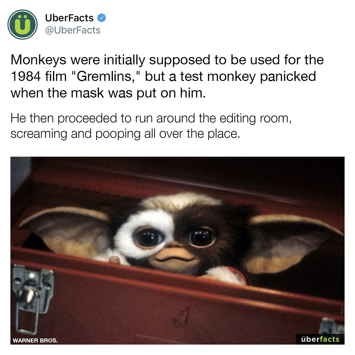 Sounds like some real monkey business to me 😜 | Movie ...