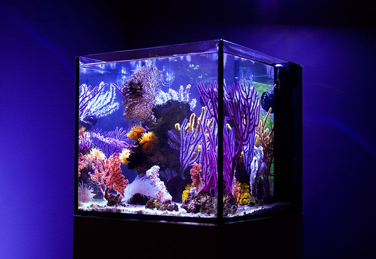 Uhuru's 20 gallon nano reef features a rare collection of non-photosynthetic coral and invertebrates