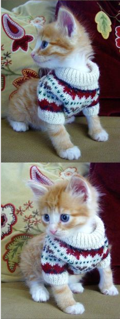Cute Sweater for kitties… http://www.FunnyBundle.com