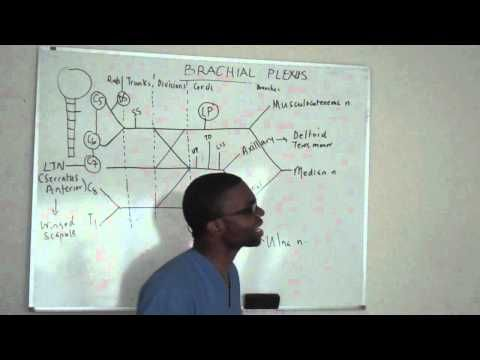 Brachial plexus made ridiculously simple PART 3 -Lecture   physical ...