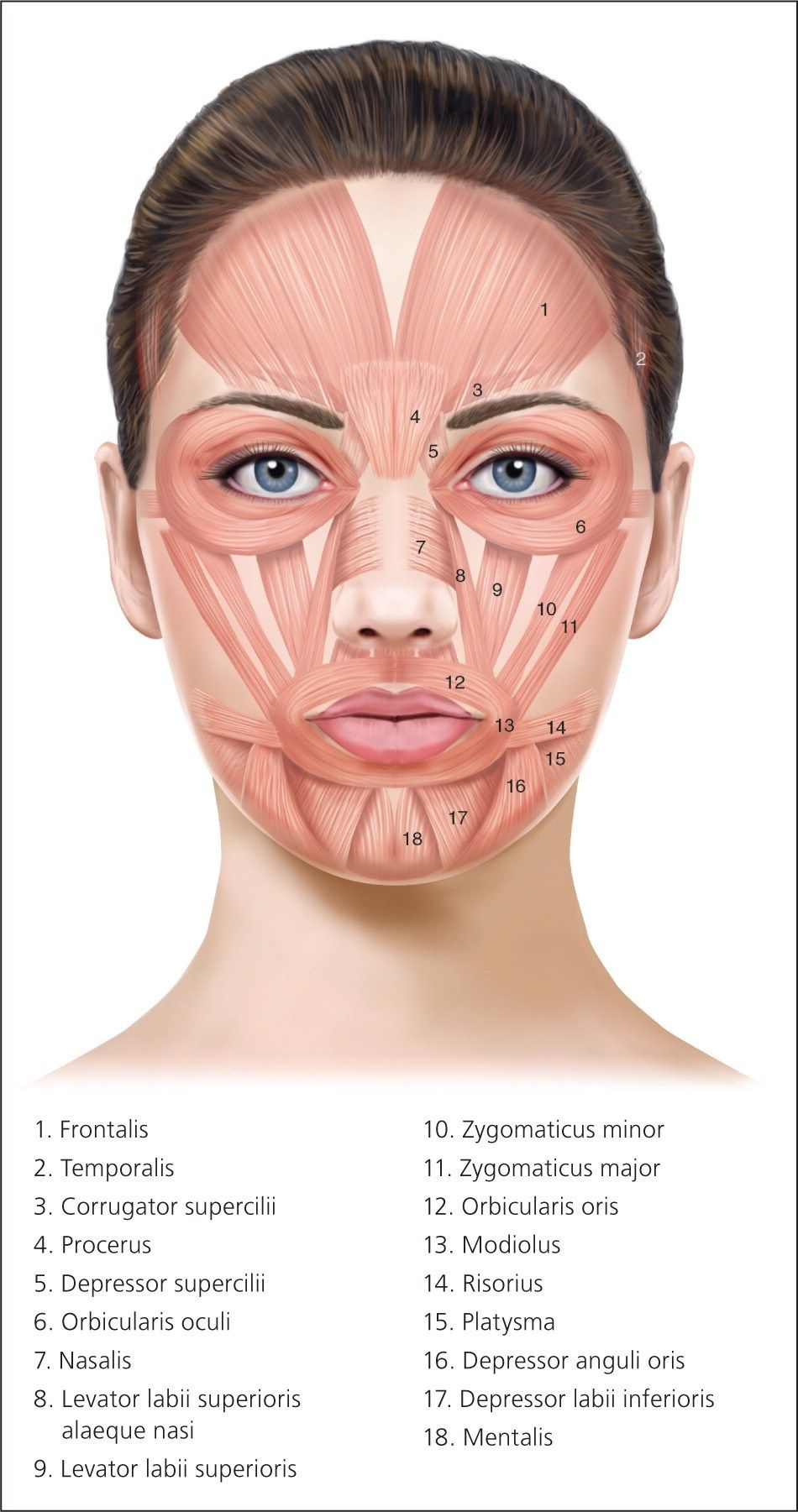 hight resolution of botox injection sites diagram insurance on cars