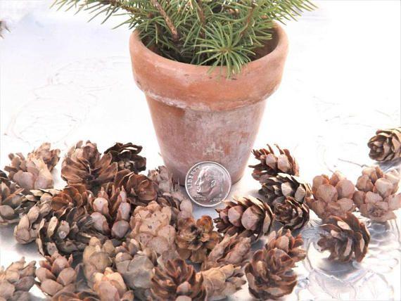 Hemlock Cones Tiny Pine Small