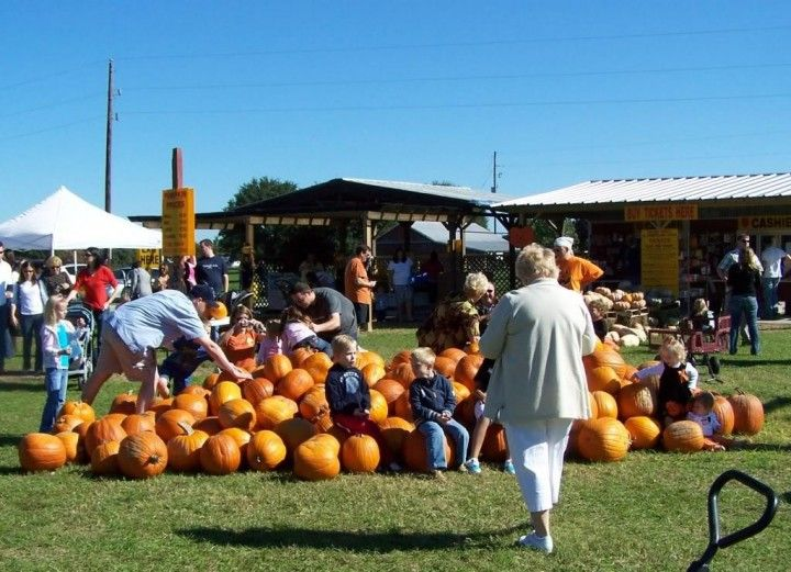 Pumpkin Patch at Old Time Christmas Tree Farm Spring, TX #Kids ...