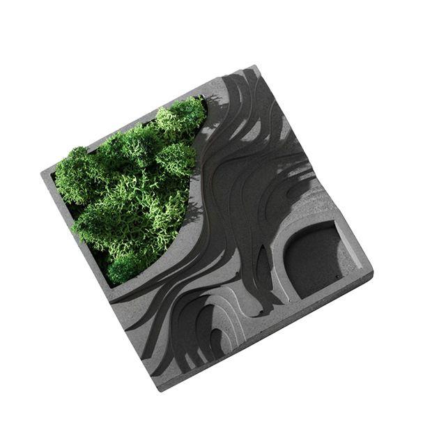 Nicole Silikonowe Betonu Formy Dla Moss Soczyste Roślin