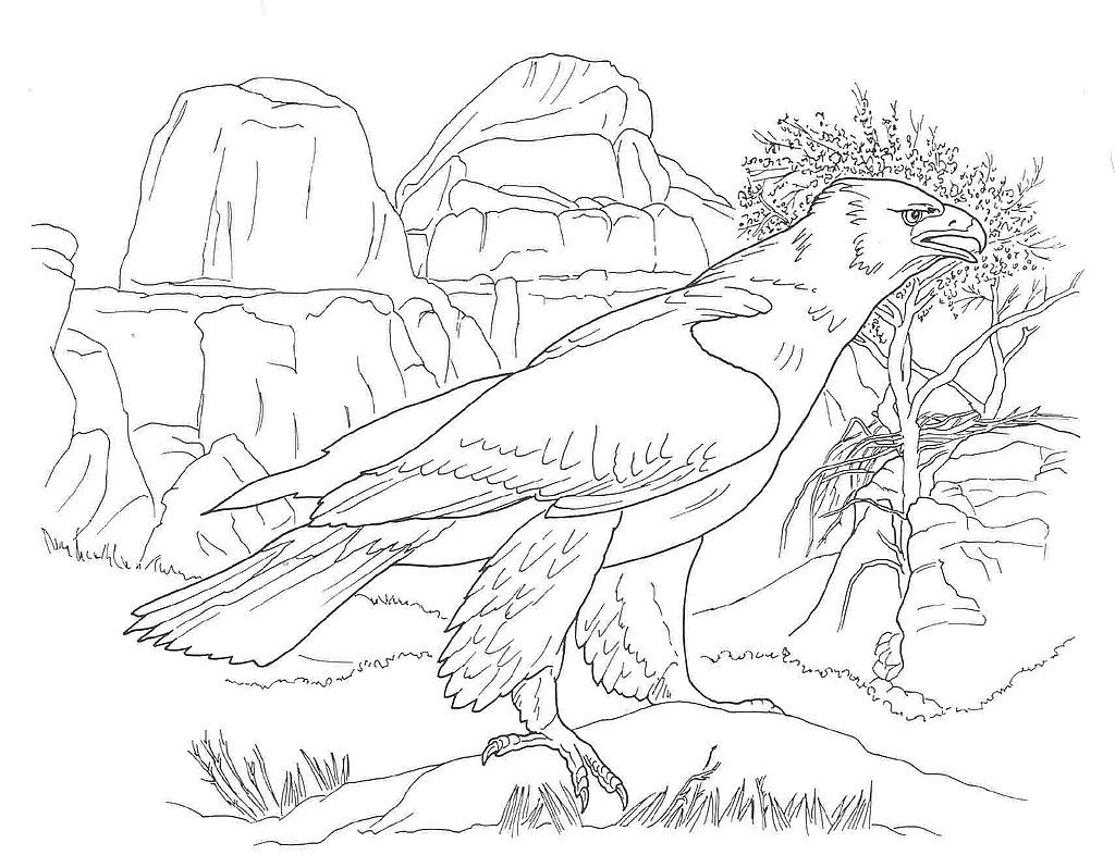 Desert Animals Coloring Pages Golden Eagle Desert Animals Coloring Animal Coloring Pages Cool Coloring Pages
