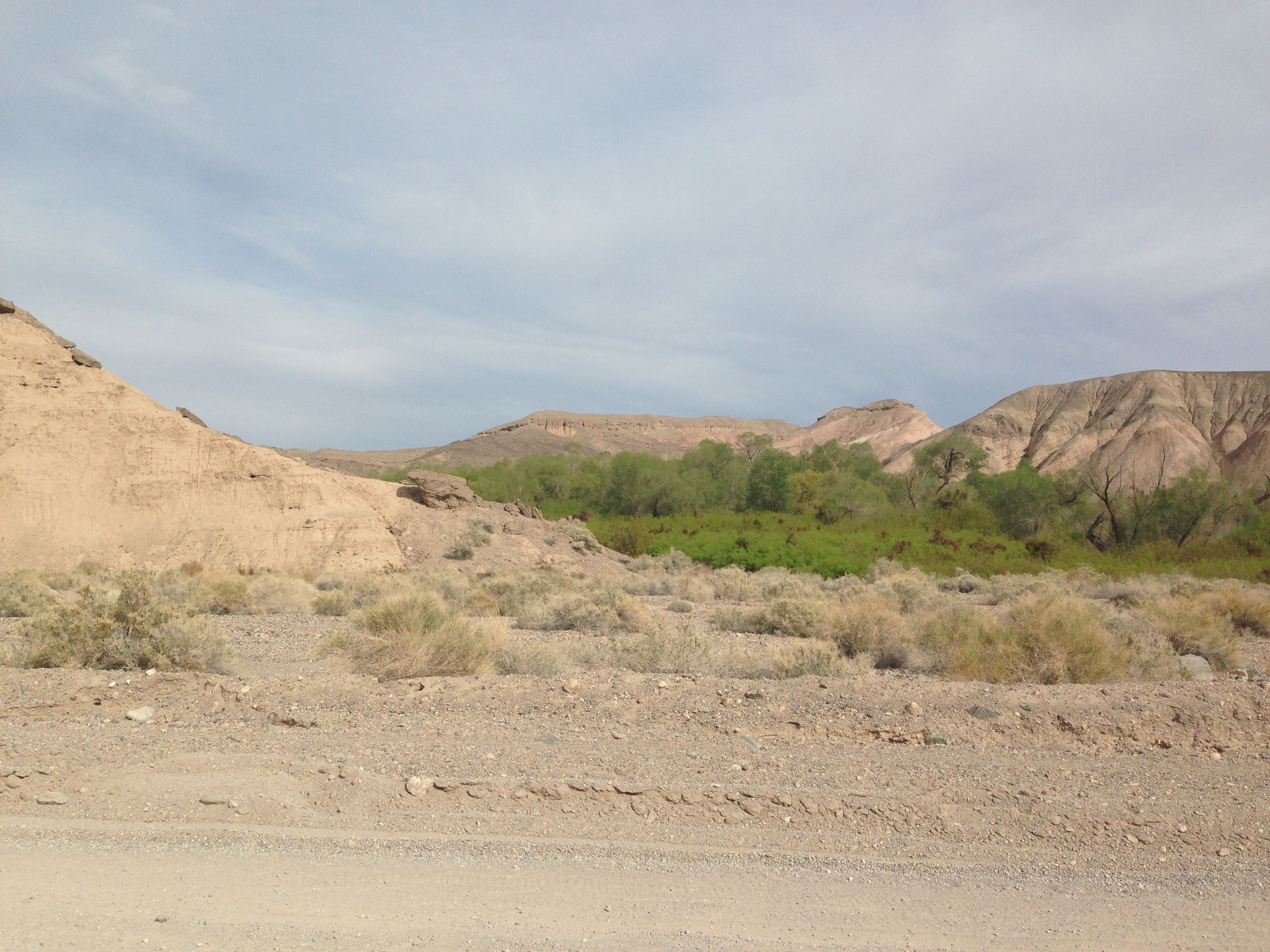 The amazing desert oasis of the China Ranch Date Farm, from the Amargosa River in CA