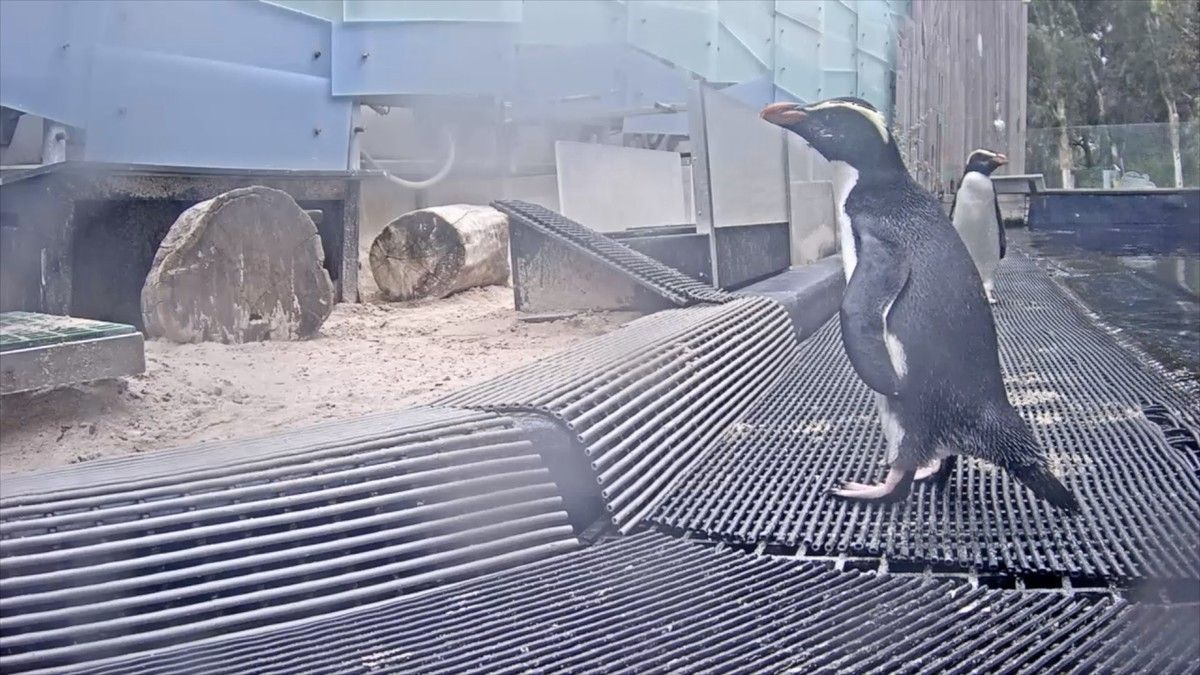 Melbournes zoos have decided to live stream some of their