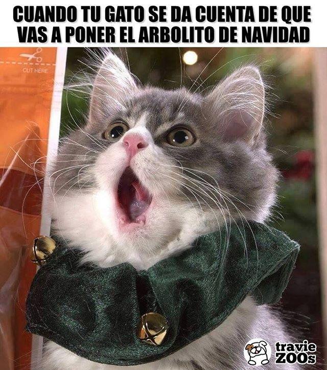 Tantas Cosas Por Destruir Gracias Humano Christmas Navidad Arbolito Christm Meme Gato Memes De Animales Divertidos Mascotas Memes