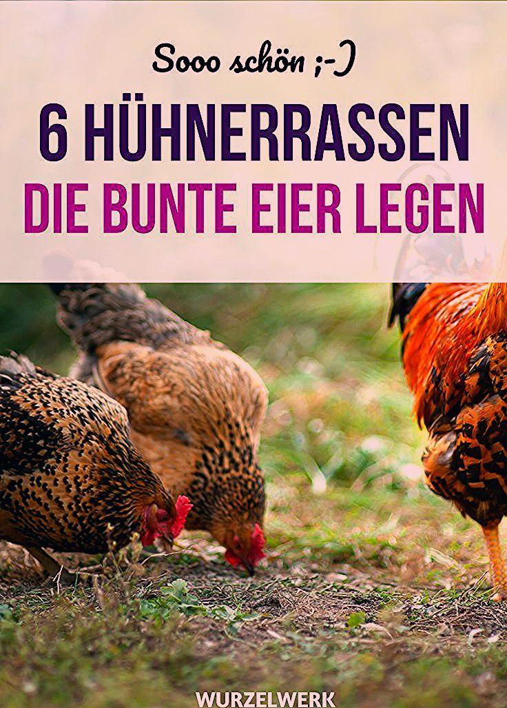 Photo of Die 6 besten Hühnerrassen für einen bunten Eierkorb.