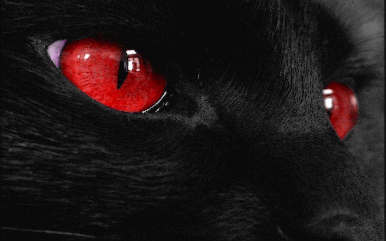 Black Cat Red Eyes Wallpapers HD Wallpapers Kara kedi
