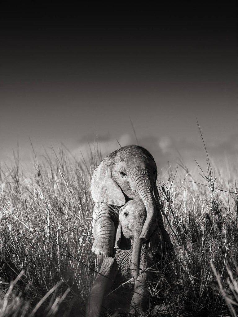 Joachim Schmeisser Wild elephant babies playing I, contemporary, wildlife, b+w photography
