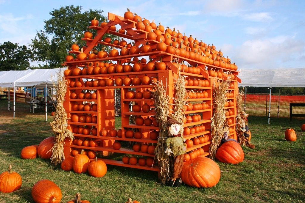 Does your child love to visit the pumpkin patch every fall