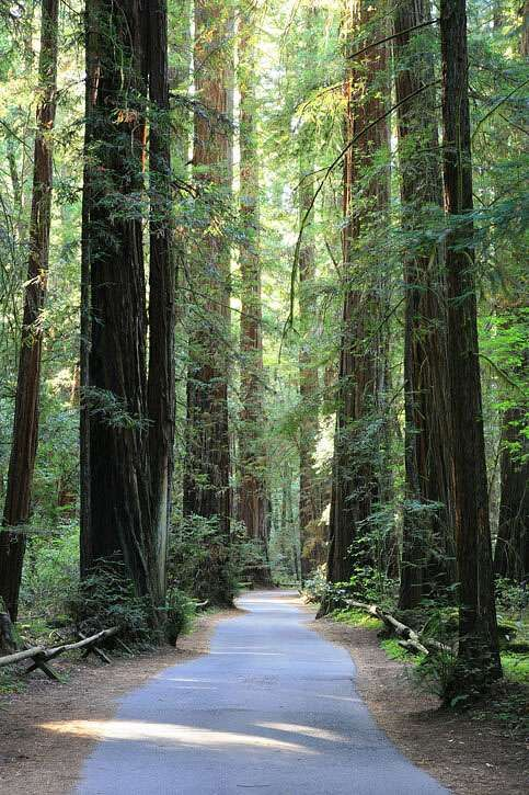 Armstrong Redwoods State Natural Reserve I hiked it today and
