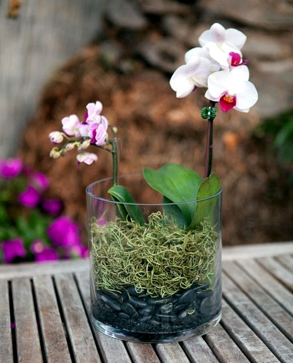 Two Types Of Orchid In A Gl Planter