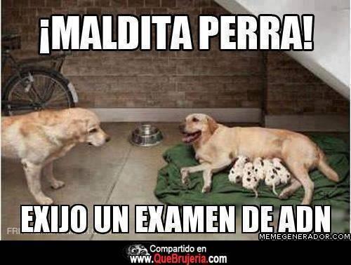 Adn Meme Memes Perros Perros El Encantador De Perros