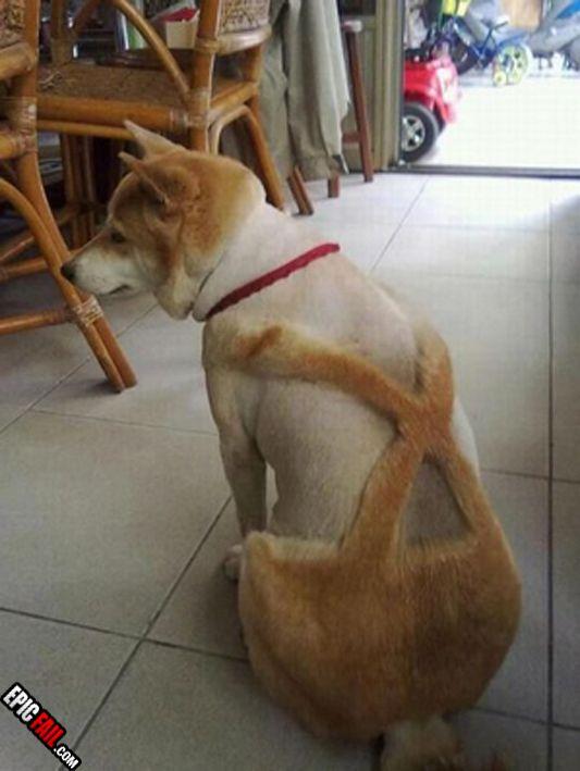 Dog Grooming Fail