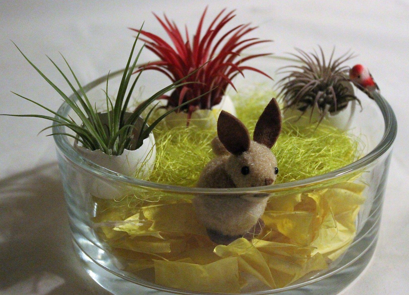 Tillandsia's & Easterbunny