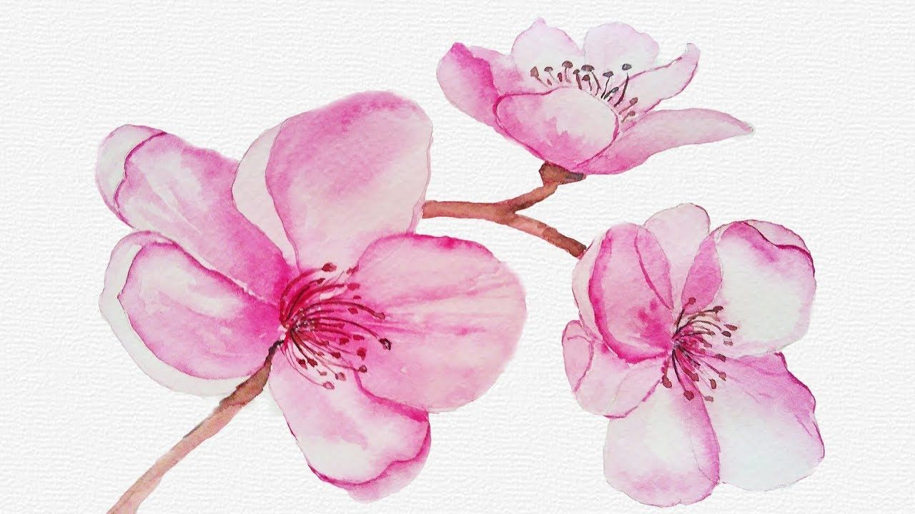 Watercolor Cherry Blossom Flowers Easy Botanical Painting