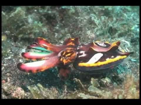 Ever wish you could flash colors across your skin? Watch Skintalkers: Cephalopods Rule