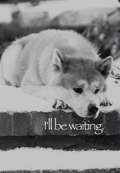 Hachiko <3 Who love this great movie ?