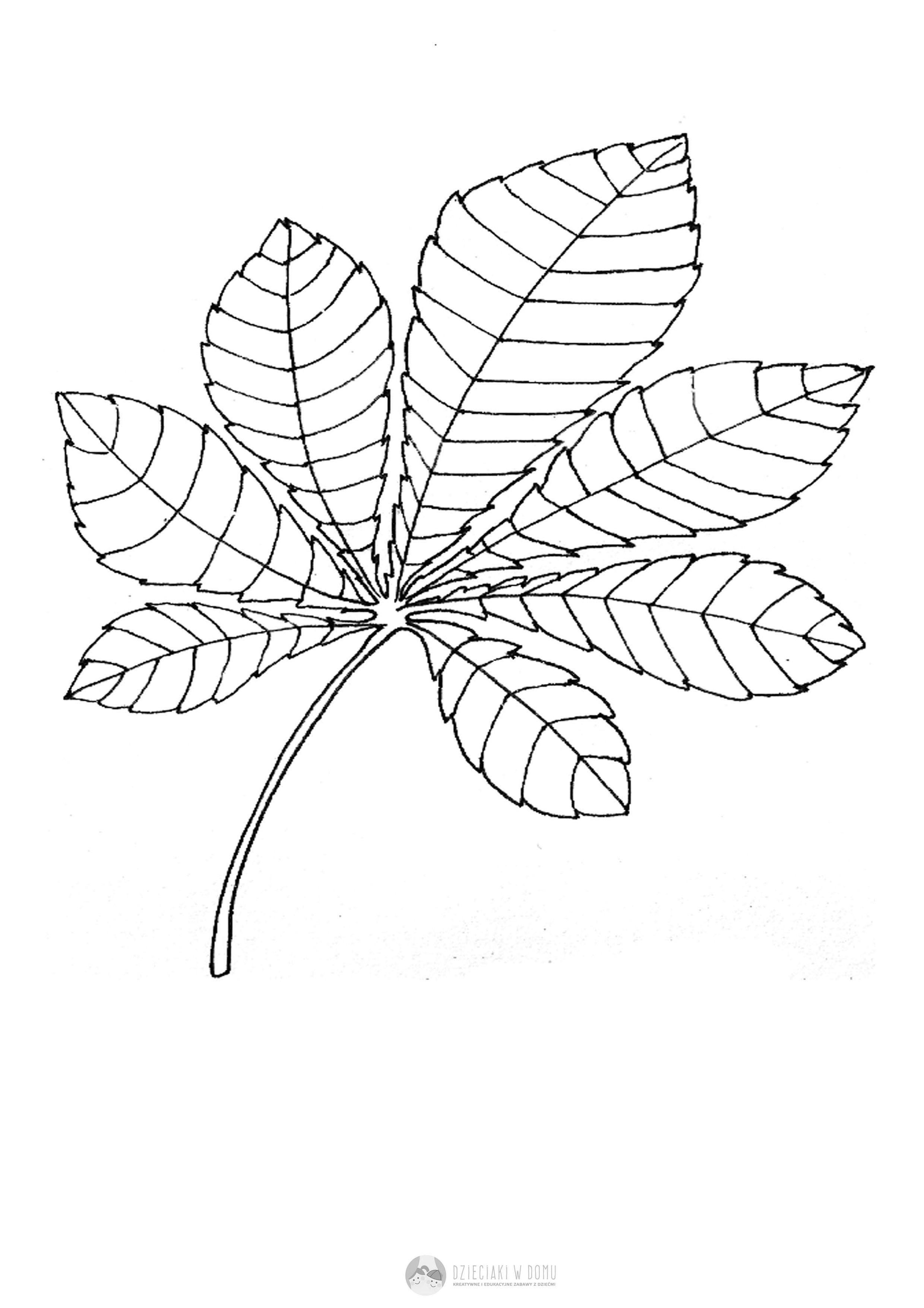 Liscie Drzew Szablony I Karty Pracy Dzieciaki W Domu Leaf Template Plant Leaves Arts And Crafts
