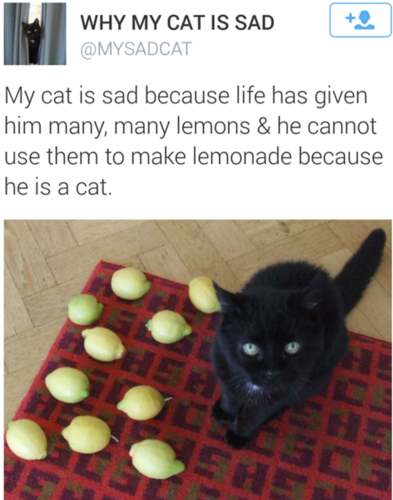 Of The Saddest Pictures That Exist On The Entire Internet - The 18 saddest photos on the internet