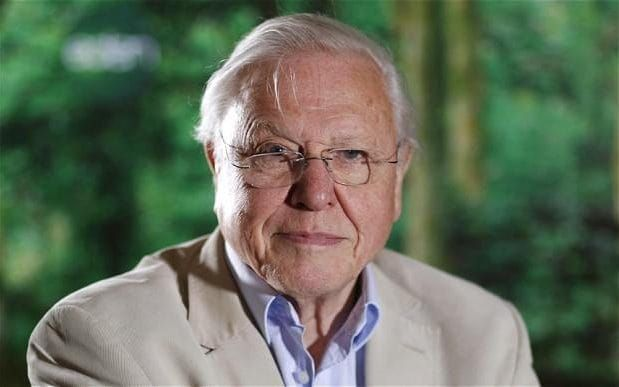 sir david attenborough s best quotes about women equality  to sir love essay david attenborough humans are plague on earth telegraph