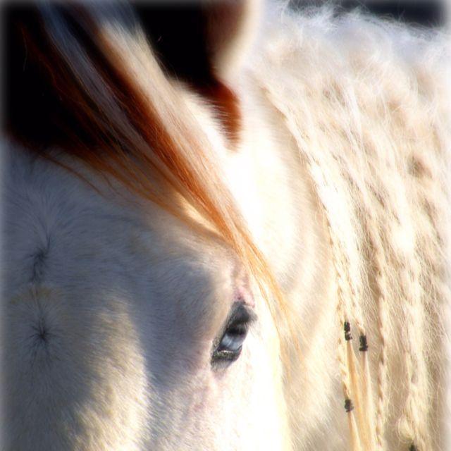 QTPocos Sonny Dancer APHA Stallion