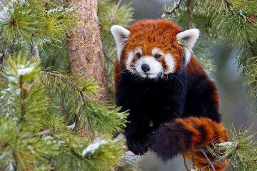 Our World's Wildlife - Community - Google+...my 2nd fav animal