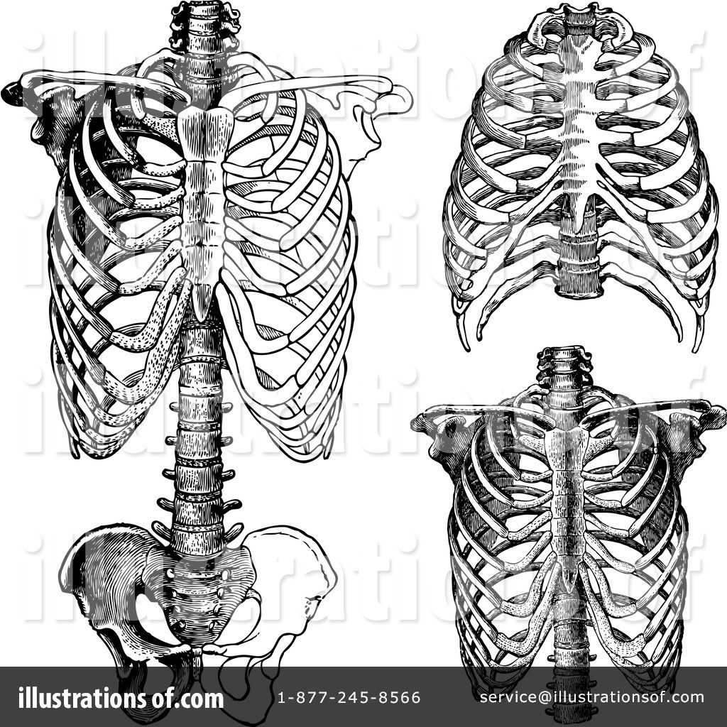 free anatomical heart clipart - Google Search | Bloody Hearts ...