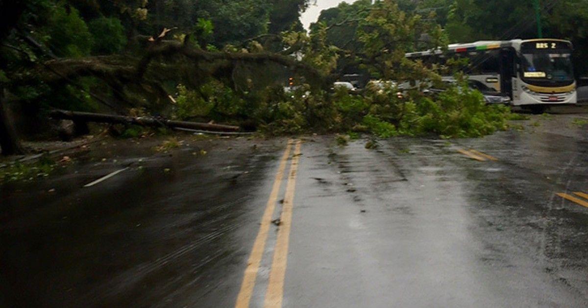 Chuva derruba árvores e complica trânsito na Zona Sul do Rio