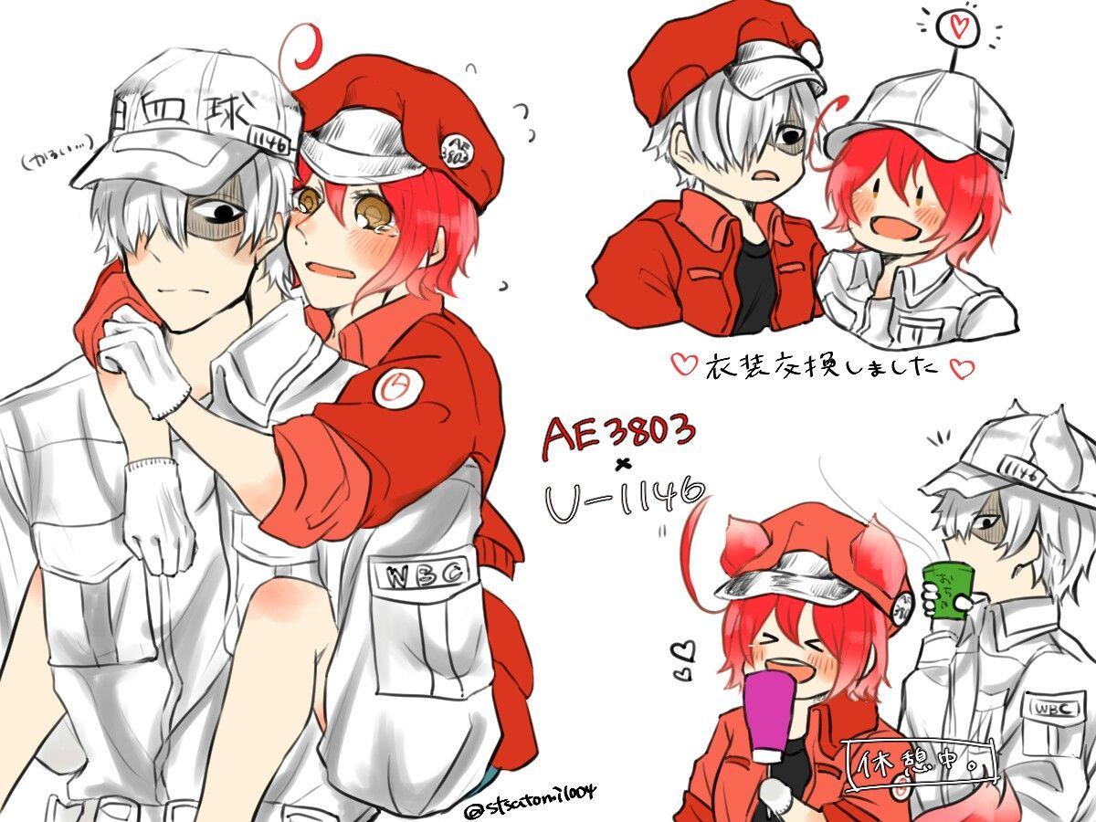 Hataraku Saibou Cells at work! Cr anzu Red blood